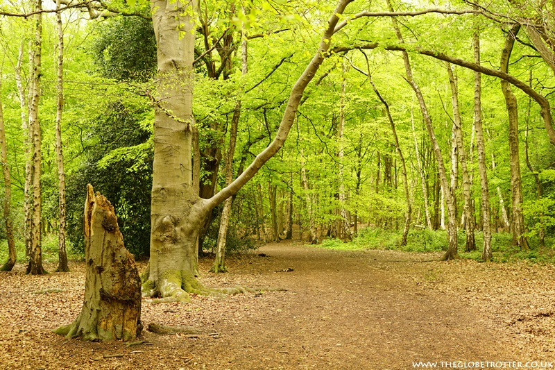 Oak Wood in Trent Country Park