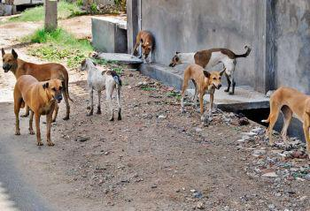 View topic - The Stray Dogs (NEW AND ACCEPTING) - Chicken