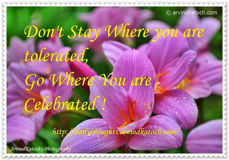 Celebrated, Tolerated, Daily Thought, Quote,