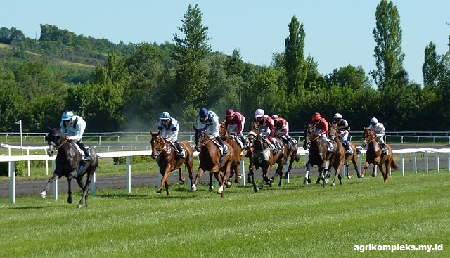 kuda merupakan hewan yang dekat dengan manusia sehingga keberadaannya dipertahankan karen Perkembangan Kuda Di Indonesia