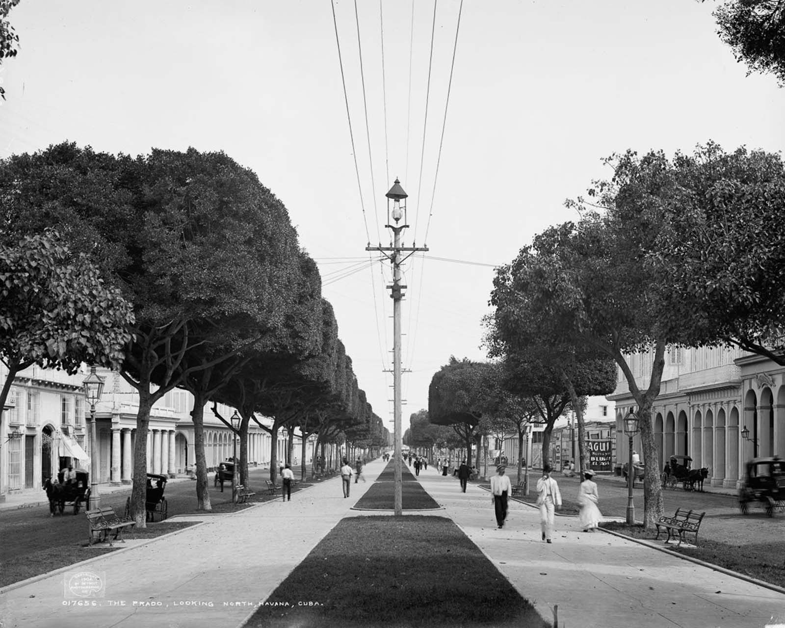 A view looking north down the Paseo del Prado. 1900.