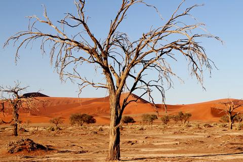 Tree care drought Alpharetta Ga