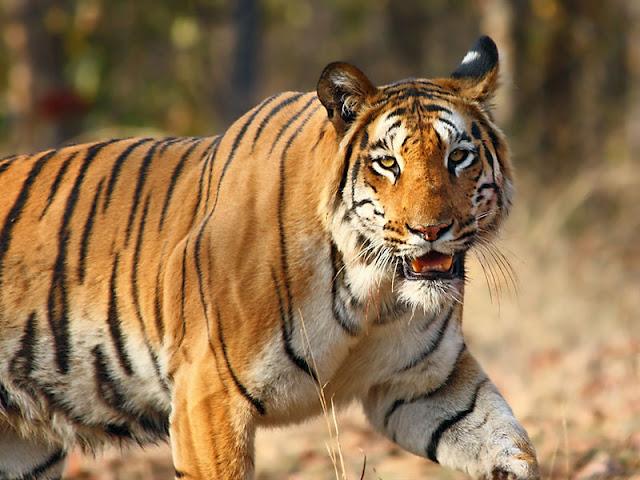 Fauna of Himachal Pradesh