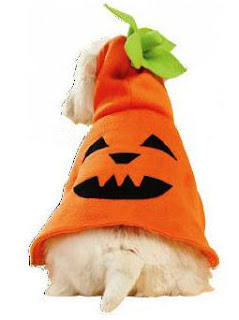 Dog Pumpkin Costume Patterns | FREE PDF DOWNLOAD