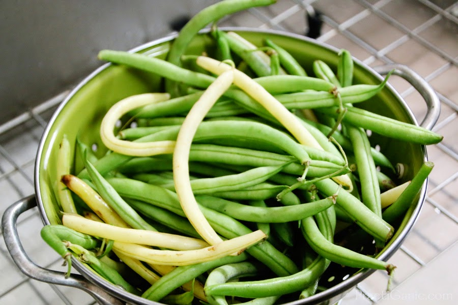 How To Freeze Green Beans And Other Vegetables Practiganic