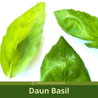 Ciri Ciri Pohon Basil