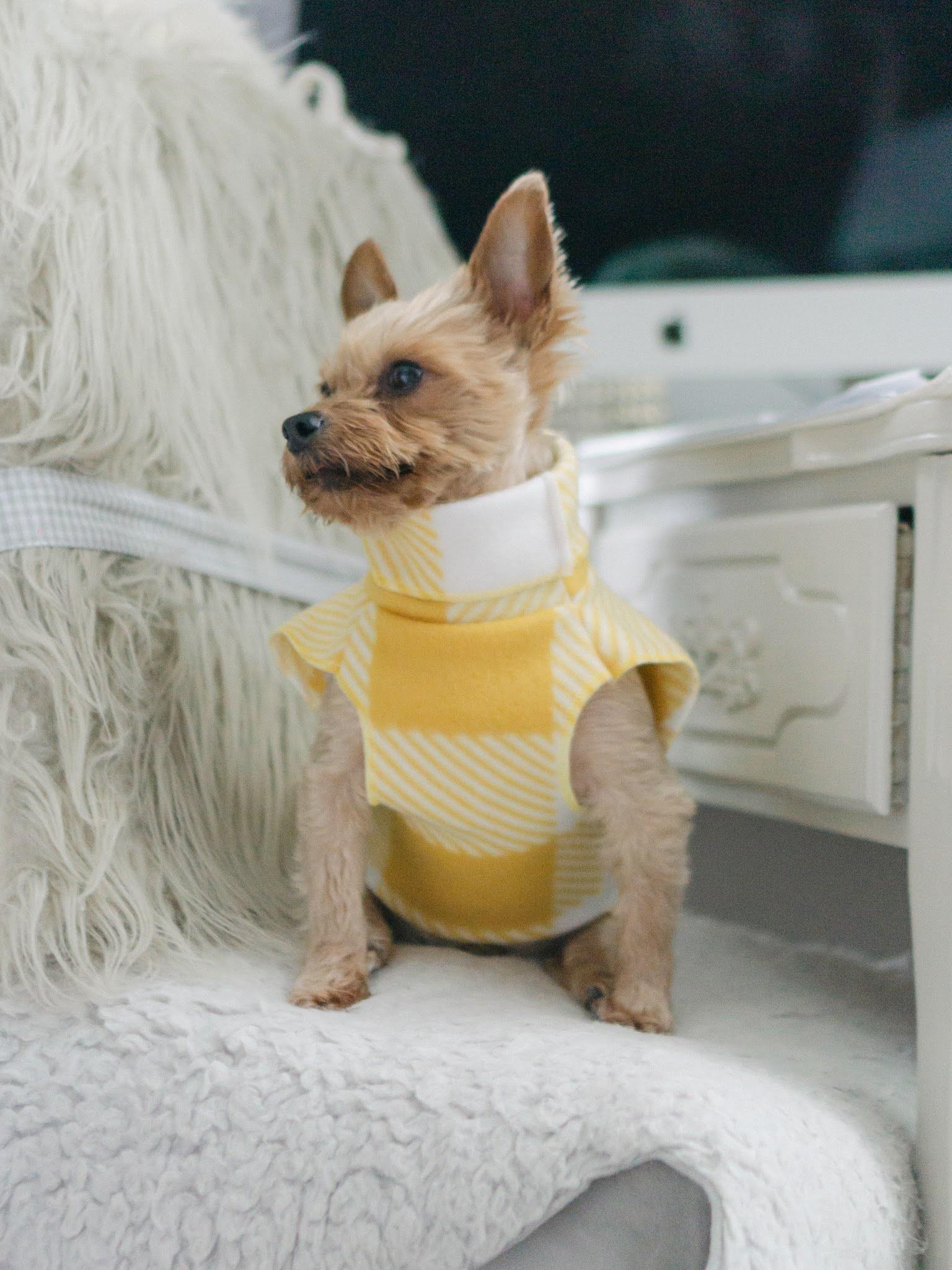 Etsy Pet Apparel Shops