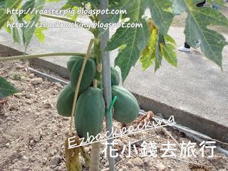 香港摘水果農莊