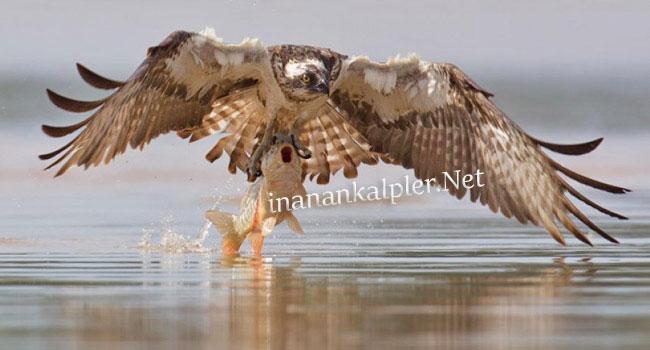 Vahşi Doğadan Avlanma Anları 8