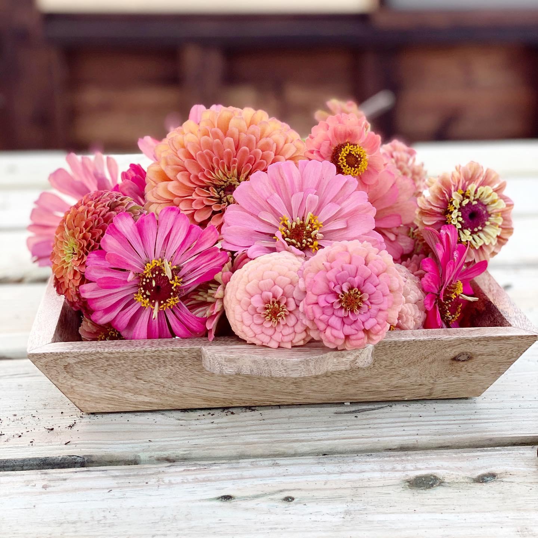 Zinnias Floret Flower Farm Yoderbilt Greenhouse