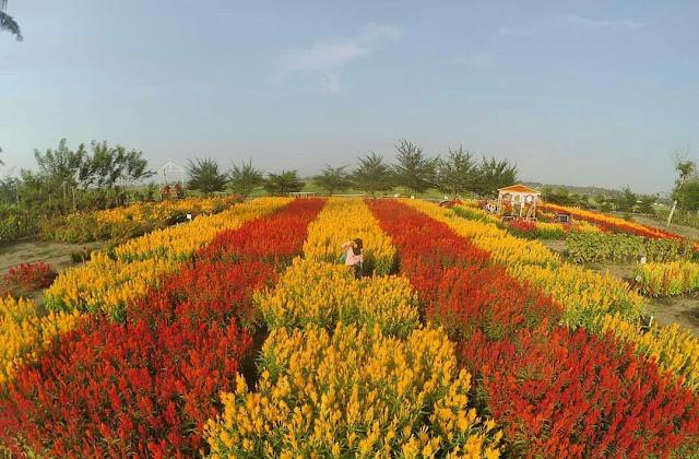 Taman Bunga Asri: Alamat, Rute, dan Harga Tiket Masuk Terbaru
