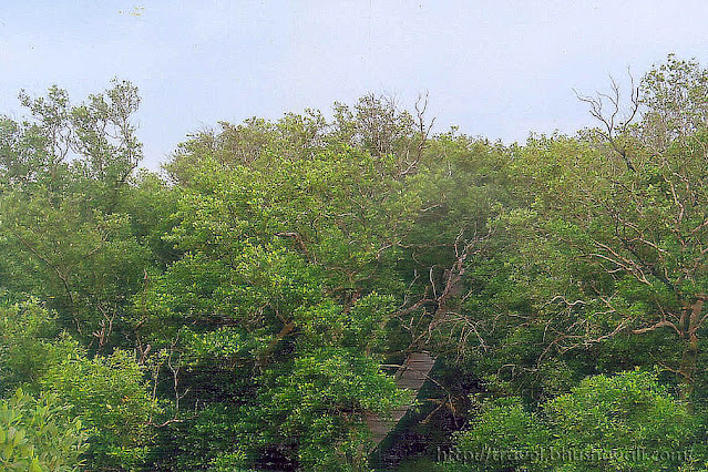 Watch Tower & Board Walk at Muthupettai mangrove