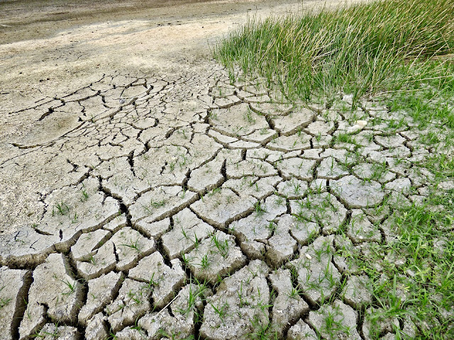 Water Crisis Facts, Dry Soil, No Water,DRY PADDY FIELD