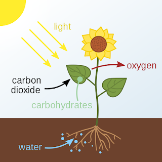 PHOTOSYNTHESIS ICSE Class 10th Biology Chapter 5