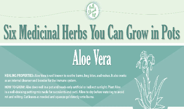 6 Medicinal Herbs You Can Grow in Pots #infographic