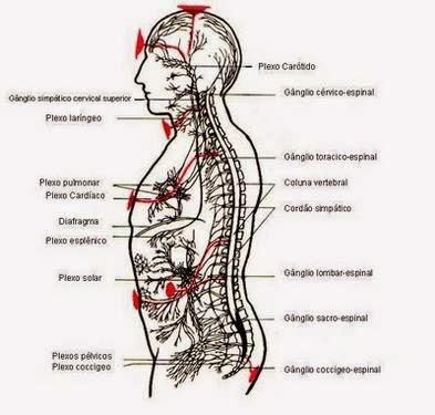 massagem ayurvédica terapia milenar  a massagem