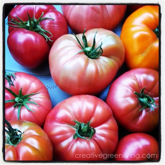 tomatoes #creativegreenliving
