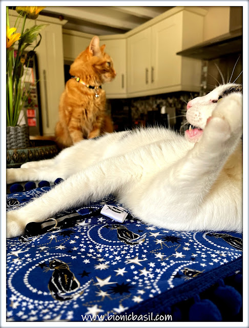 Pet Photo Fails - Melvyn and Fudge ©BionicBasil®