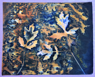 Wet cyanotype, Sue Reno, Image 45