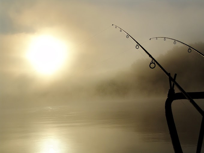 Summer Fishing - Means More Bait and Pests