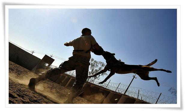 dog training biting puppy