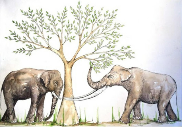Tooth wear sheds light on the feeding habits of ancient elephant relatives