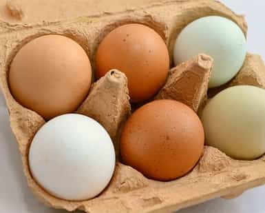 Can vitiligo patients take eggs