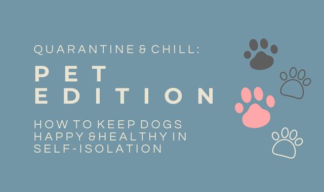 Dog care during Quarantine