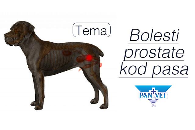 Bolesti prostate pasa