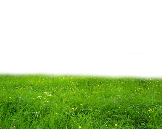 Grass PNG Images Download