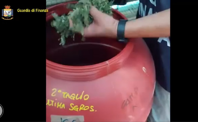 Sardegna: maxi sequestro di marijuana