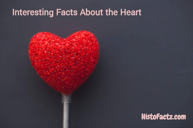 Interesting Facts About the Heart