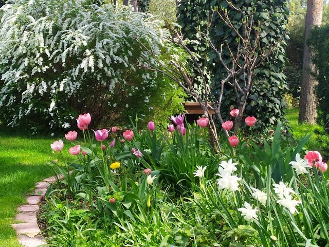 kwiaty wiosny