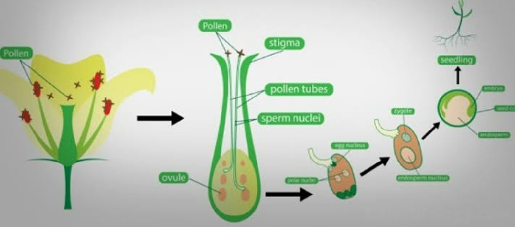 Download Best Reading Materials For Biology (pdf)