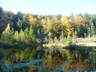 Озеро Журавлиное (Мёртвое). Львовская обл.
