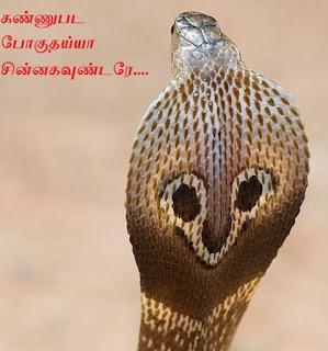Cobra Snake - Indian Cobra