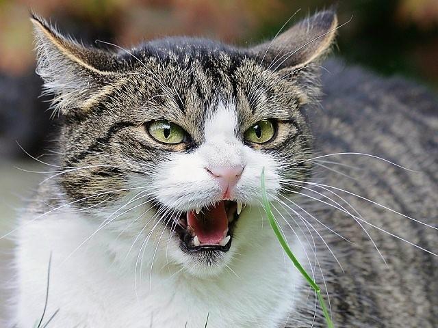 Заложническа криза: Котка държа и тероризира два дни стопанката си в кухнята