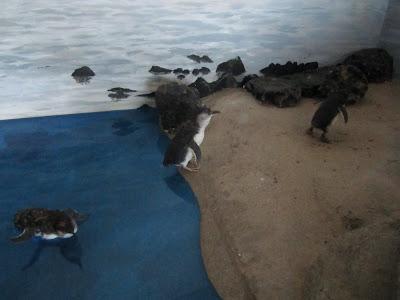 Penguinpingvinen vaggar vidare