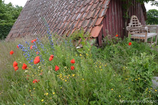 Historikk og oppskrift på en cottage garden. Blomstereng utenfor et uthus