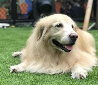 Kiat Membawa & Menitipkan Anjing Waktu Liburan