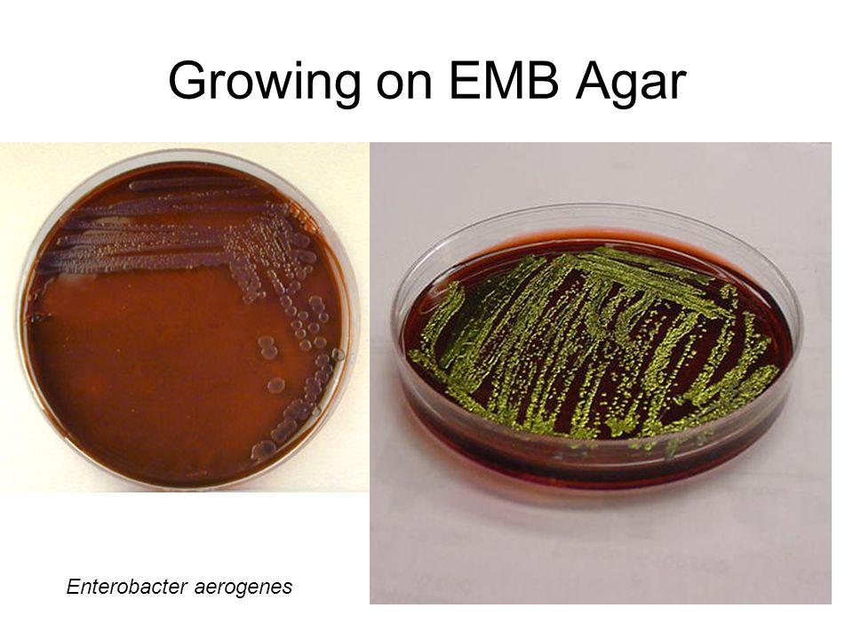 Eosin Methylene Blue (EMB) Agar : Principle ,purpose and