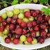Cel mai puternic fruct din lume! Este plin de antioxidanti si are de 20 de ori mai multa vitamina C decat sucul de portocale