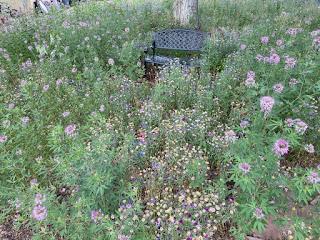 Flowers Around Bench