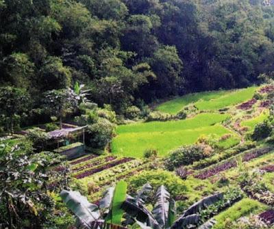 Budidaya Sayuran Organik