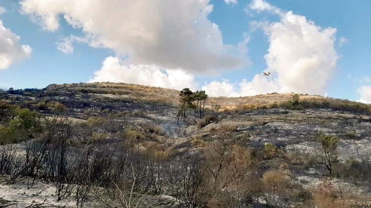 WWF: Από βολές του Στρατού προκλήθηκε η πυρκαγιά στη Λευκίμη Έβρου