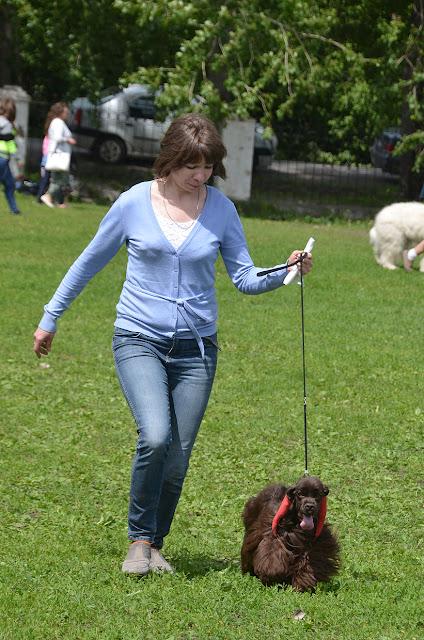 Выставка собак в Кунгуре