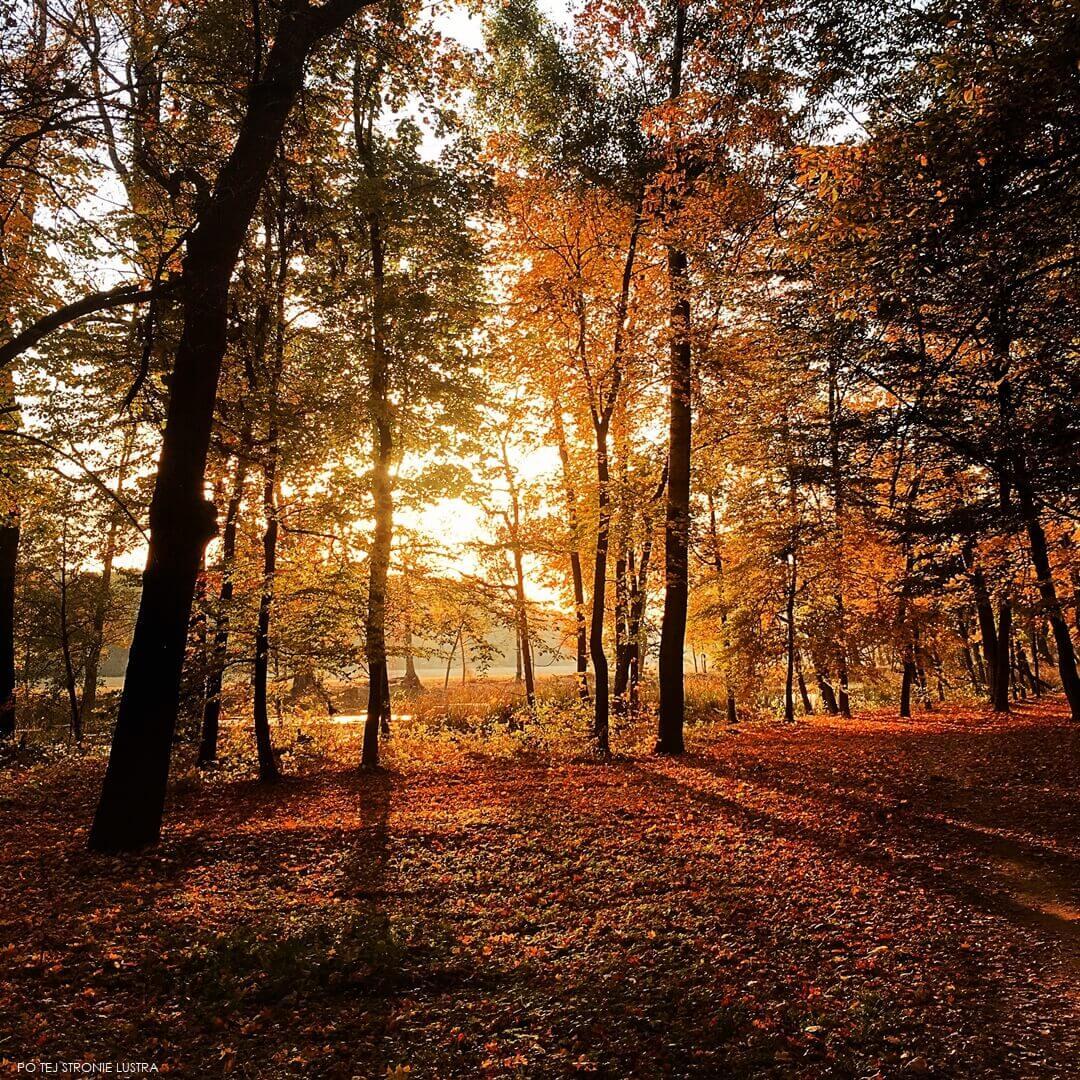 jesienny spacer po parku