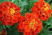 От цветов на которые смотрят к цветам которые едят, цветы, съедобные цветы, травы, съедобные травы, какие цветы можно есть, какие цветы нельзя есть, цветы в кулинарии, съедобный букет, какие цветы можно добавлять в еду, советы кулинарные, экзотическая кулинария, еда, кулинария, едят ли цветы, как есть цветы, рецепты из цветов, как добавлять цветы в еду, От цветов на которые смотрят к цветам которые едят, цветы, съедобные цветы, травы, съедобные травы, какие цветы можно есть, какие цветы нельзя есть, цветы в кулинарии, съедобный букет, какие цветы можно добавлять в еду, советы кулинарные, экзотическая кулинария, еда, кулинария, едят ли цветы, как есть цветы, рецепты из цветов, как добавлять цветы в еду, съедобные цветы, съедобные цветы в кулинарии, живые цветы в дизайне, съедобные цветы для женщин, съедобные комнатные растения, какие бывают цветы для кулинарии, цветы в кулинарии, цветы для украшения блюд, вкусные цветы, как сделать съедобный букет, настурция, съедобные букеты, какие цветы можно есть, какие цветы нельзя есть, пион, какие цветы пригодны в пищу, съедобные цветки в горшке, съедобные цветки растений, съедобные цветки кактуса, съедобные цветки лилии, съедобные цветки гибискуса, настурция цветки съедобные, какие цветы можно есть, какие части цветков можно есть, ядовитые цветки, как есть цветы, декор блюд съедобными цветами,съедобные цветы