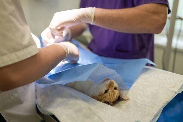 usticia condenó a clínica veterinaria por negarse a entregar información al SERNAC