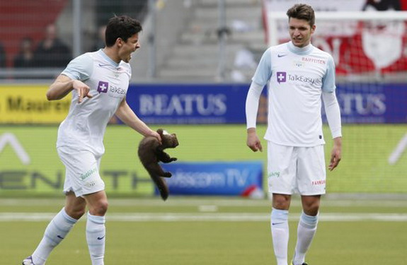 Zürich player Loris Benito attempts to remove a marten which was running on the pitch